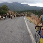 Goats road cycling Peloponnese mountain